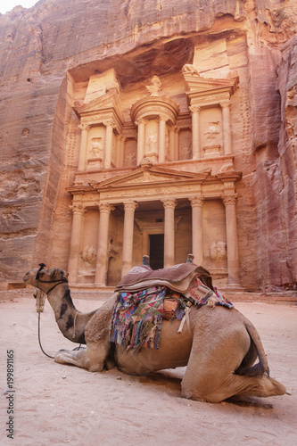 Fotobehang Midden Oosten Camel near the Treasury. Petra. Jordan landmark