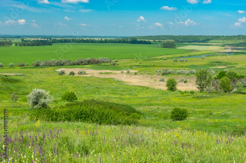 Foto op Plexiglas Pistache Summer landscape with agricultural fields and water-meadows near Oril river in central Ukraine