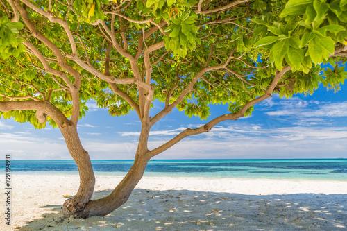 Photo  Divi Divi tree on white sandy tropical beach