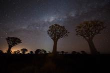 Beautiful Night In Savanna