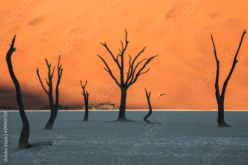 Dead trees in deserts