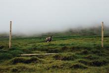 Landschaft Auf Färöer Mit Schaf