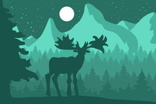 Elk In The Night Coniferous Fo...