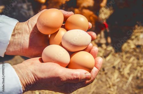 Chicken eggs in hands. Selective focus.