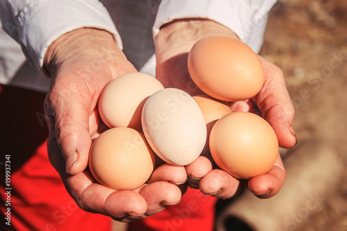 Chicken eggs in hands. Selective focus.