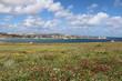Colorful flower meadow at Saint Thomas Bay of Marsaskala and the Mediterranean Sea Malta