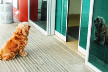 Red Dog Is Waiting For Owner O...