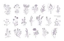 Bundle Of Detailed Botanical D...