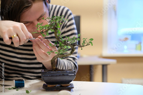 Spoed Foto op Canvas Bonsai A man forms the crown of a small ornamental bonsai tree