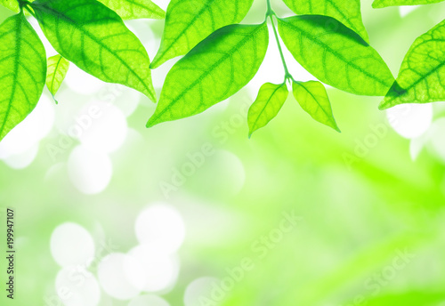 Fototapety, obrazy: Closeup fresh green leaves on blurred abstract light spot bokeh in the park background with copy space