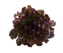 Red Oak Leaf Lettuce On A Whit...