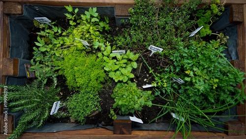Hochbeet Im Garten An Der Terrasse Buy This Stock Photo And