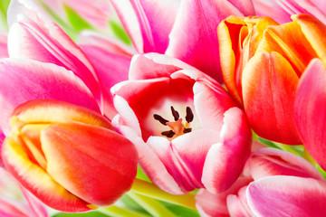 Panel Szklany Tulipany Tulpen