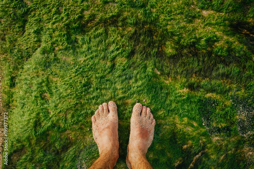 Bare feet stand on the ocean coast on top of green moist algae Canvas Print