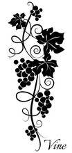 Black And White Grapevine Pattern. Stylized Grapes. Vector Illustration.
