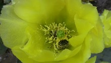 Cactus Flower And Bugs Close HD