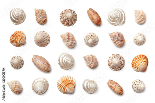 Fotografia Collection of small exotic shells isolated on a white background.