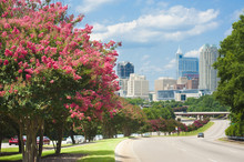 Raleigh Skyline In The Summer With Colorful Crepe Myrtle Trees In Bloom