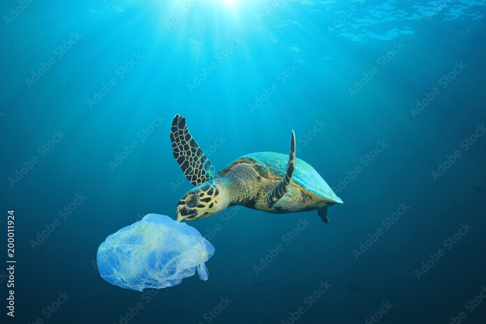 Fototapety, obrazy: Plastic pollution in ocean problem. Sea Turtle eats plastic bag