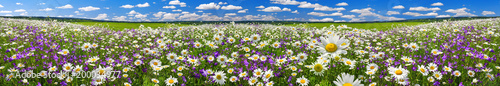 In de dag Madeliefjes spring landscape panorama with flowering flowers on meadow