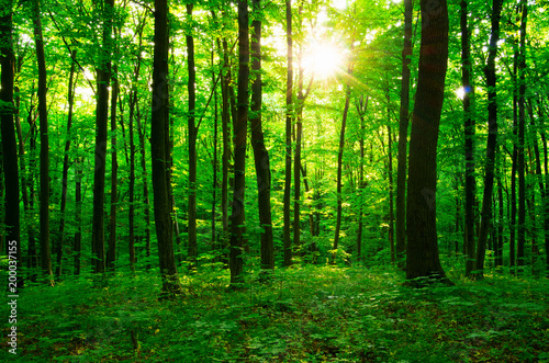 Foto op Canvas Bos forest green