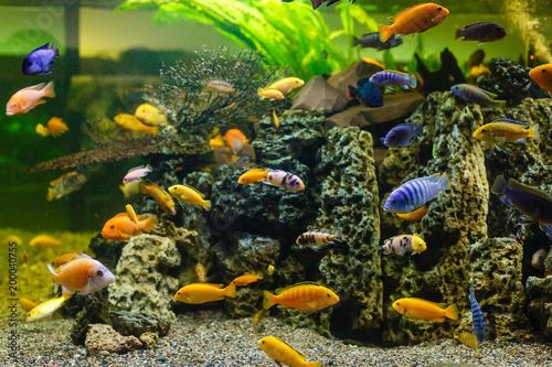 Plakat Ryby akwariowe. podwodny świat.
