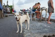 A Dog At Echo Beach In Canggu, Bali.