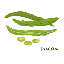 Broad Bean. Flat Design. Vecto...