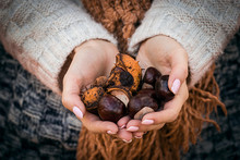 Girl With Chestnuts In Your Hands