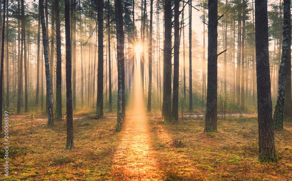 Fototapety, obrazy: Sunny autumnal scene