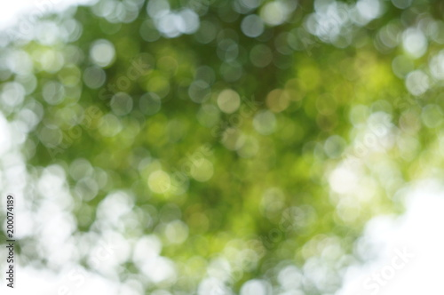 Fototapety, obrazy: The blurry image of tree with green and white circular bokeh made from photographing under the tree behind sun shine at morning. That made feeling fresh warm and make new inspiration for hard working.