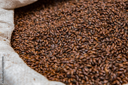 Canvas Close-up Dried Dark Black Barley Malt in a sack for brewing beer