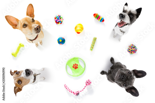 Deurstickers Crazy dog couple of dogs with pet toys