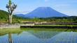 malerischer Vulkan Mt. Agung in Bali spiegelt sich im nassen Reisfeld in grüner Landschaft