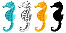 Seahorse Collection. Hippocamp...