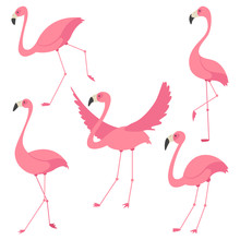 Pink Flamingo Vector Cartoon F...