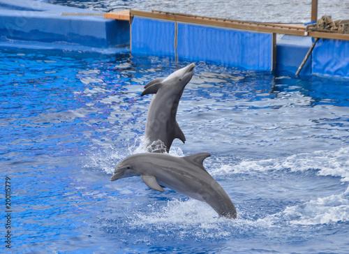 Foto op Plexiglas Dolfijnen delfines saltando en piscina