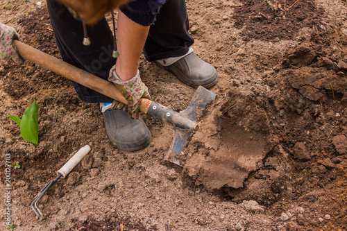 Fototapeta Female Farmer In Rubber Boots Didgging The Garden