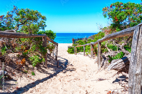 Poster Marron chocolat path towards the sea through the beach
