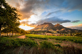 Fototapeta Room - Wine region near Stellenbosch looking at Simonsberg in South Africa