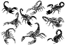 Graphical Set Of Scorpions Iso...