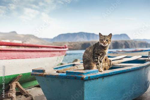 Poster Canarische Eilanden Cat on a blue boat, Gran Canaria