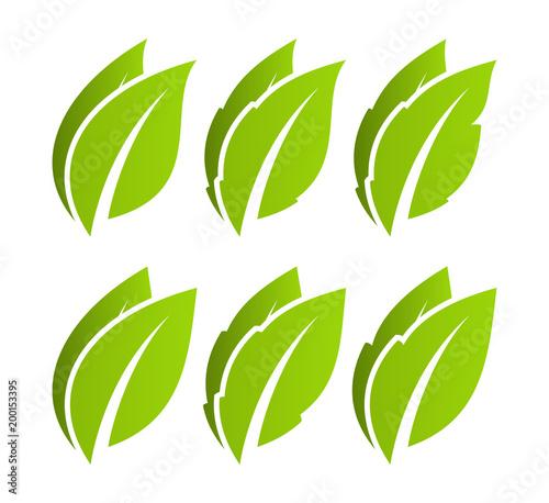 Fototapeta Green leaf set. Eco obraz na płótnie