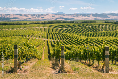Tuinposter Wijngaard rolling hills with vineyards in Marlborough region, South Island, New Zealand
