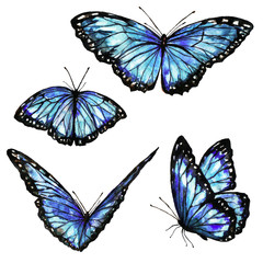 beautiful blue  butterflies,watercolor,isolated on a white