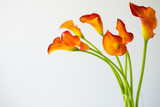 Bunch of fresh orange Calla lilly flowers with copy space.