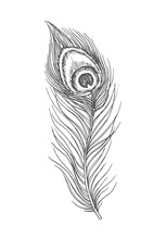 Beautiful Hand Drawn Peacock Feather Doodle, Ink Sketch Isolated On White Background. Vintage Vector Illustration.