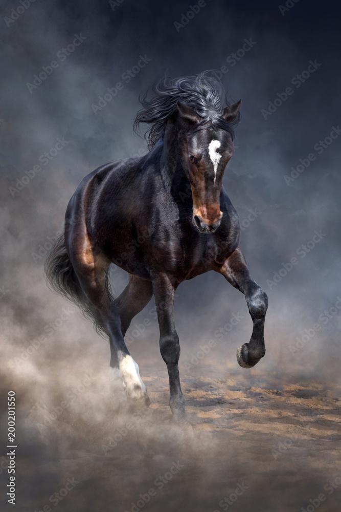 Fototapety, obrazy: Wild horse run in dark desert dust