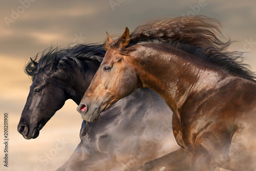 Foto op Canvas Paarden Two horse run free close up portrait