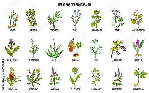 Photo  Herbs for digestive health